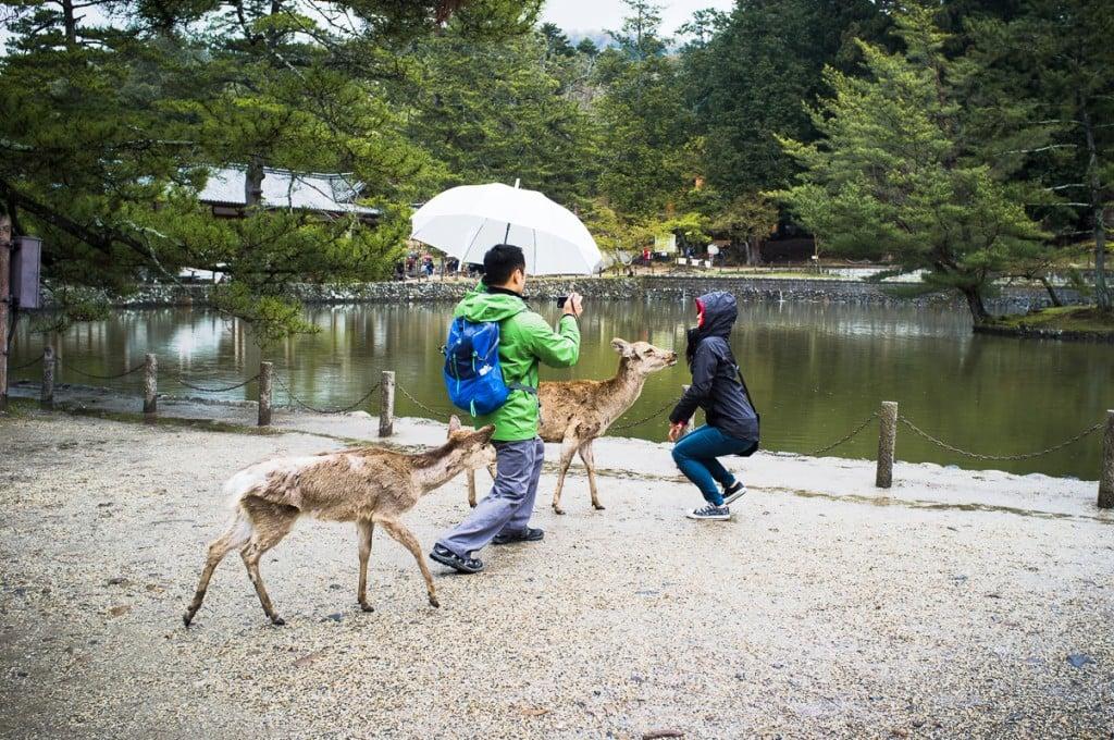 Touristes à Nara sous la pluie