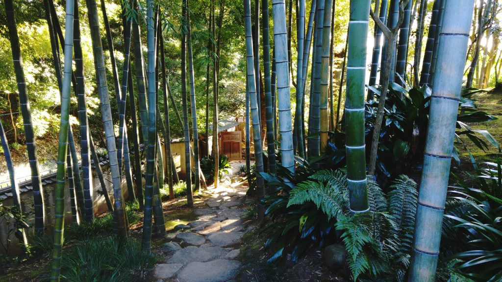 Les bambous de Todoroki
