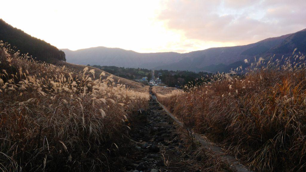 hakone-pampas-field