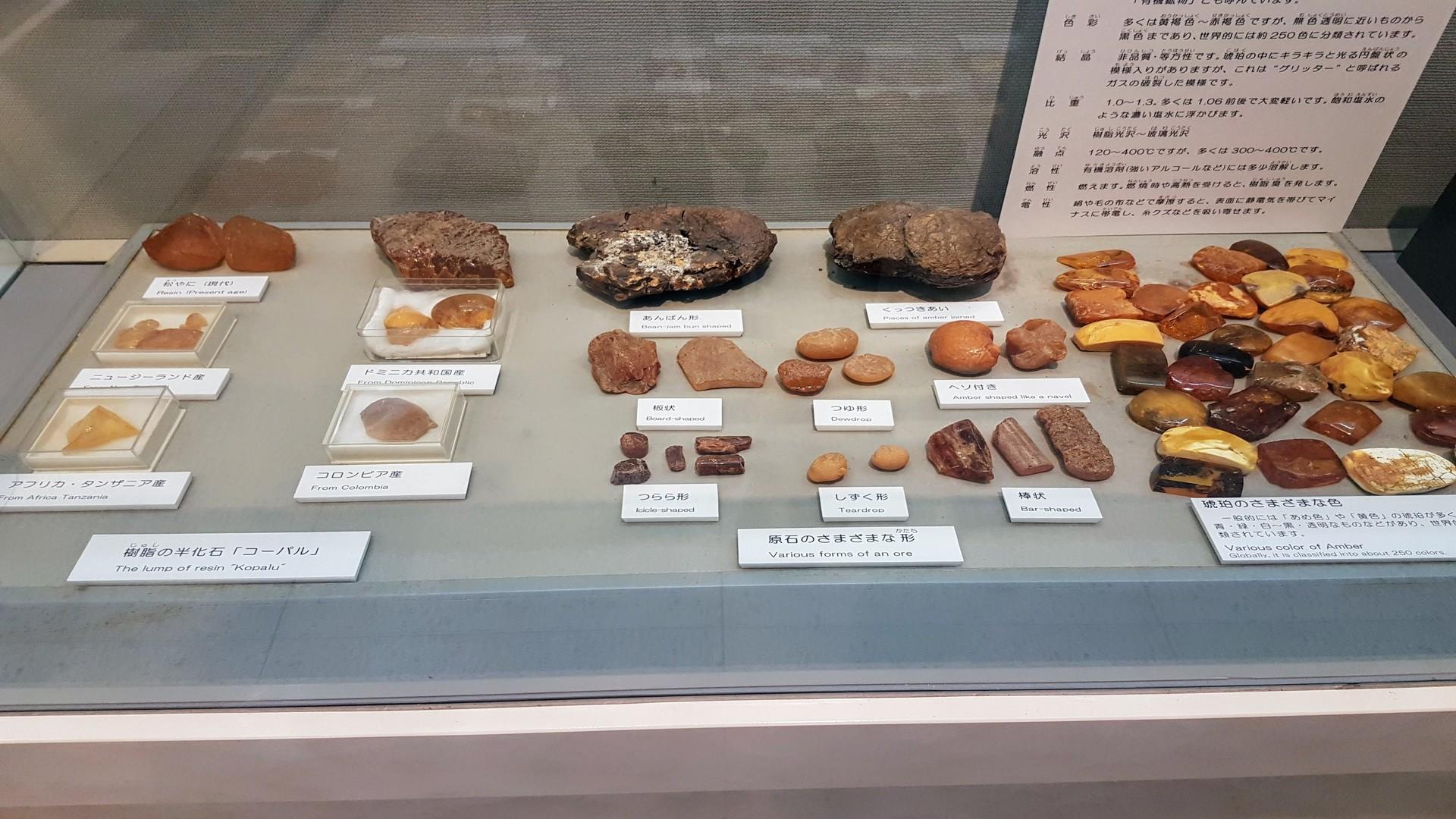 Des samples de différentes formes d'ambre au musée de l'ambre de kuji