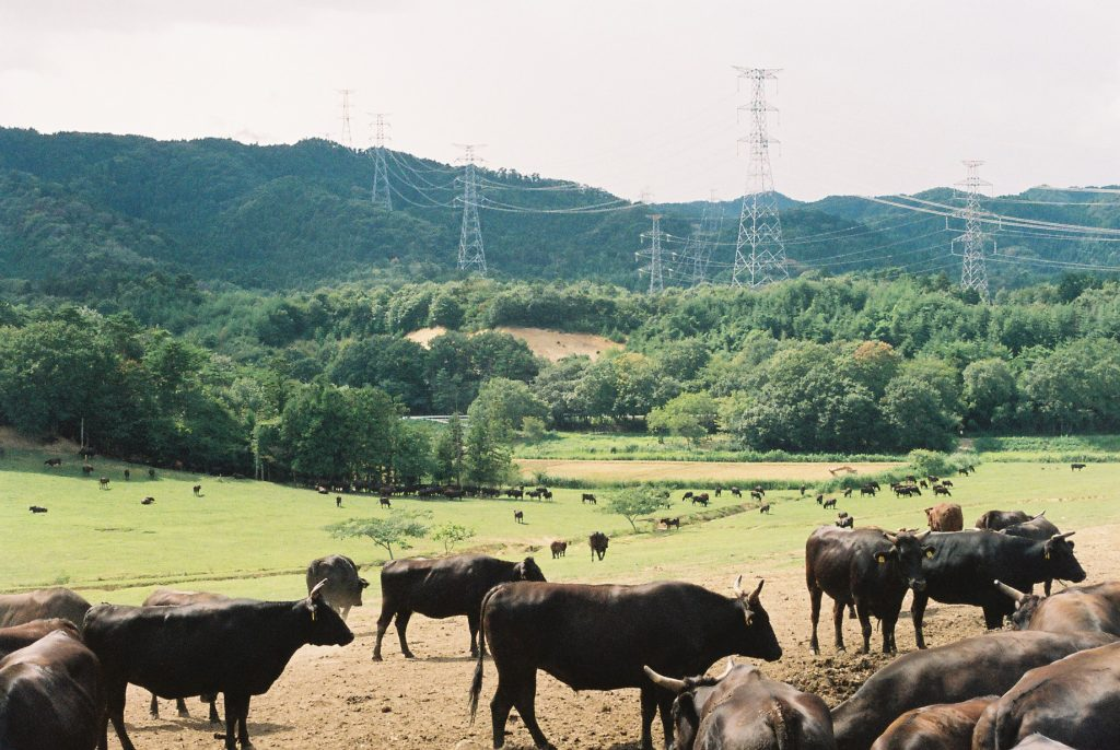 Fields in Fukushima.