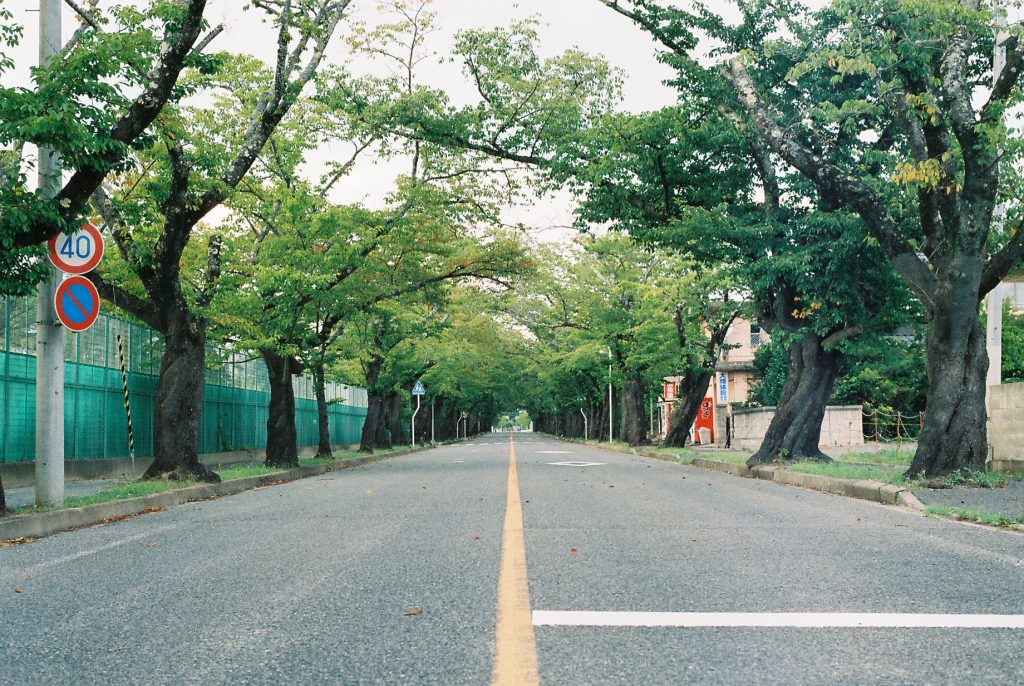 Street lined with cherry trees in Tomioka, Fukushima. Only a few meters from the exclusion zone.