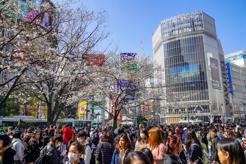 The Shibuya crossing during cherry blossom.