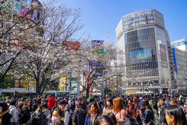 Le croisement de Shibuya pendant la floraison des cerisiers.
